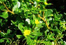 Purslane[iarba grasa - Portulaca oleraceea]