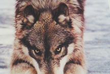 ** Wolves **
