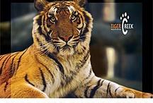 TigerCreek.org