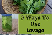 Lovage