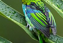 NATURA con le ali