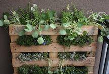 Garden Ideas / by Alicia Kahler
