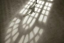 Dazzling Dance! / Beauty in dance is endless! / by Valerie Gabriel-Swenson