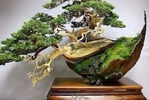 Bonsai tree and care / Bonsai trees