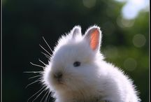 I love rabbit