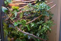 Chameleon and terrarium