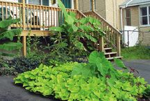 How-To: Organic Home Garden / Easy tips, tricks, and how-to's for growing your own fresh, organic vegetable garden at home.