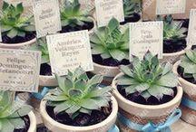 plantas y captus
