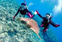 Japan's Diving Spots TOP 5 – 1!