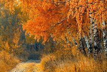 Seasons: Autumn / Photo gallery dedicated to Autumn.