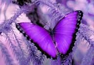 Purple Passions of Mine :)