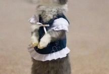 Cute fluffy