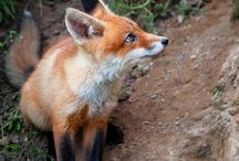 Foxx Trott / by Suzie Visser Klander