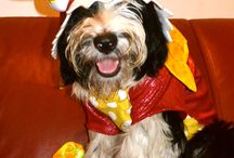 Hallowe'en! / Dogs in costumes. Need we say more?