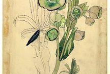 Art peinture : floral (Rennie Mackintosh)