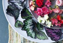 mooi wat planten doen #2