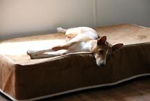 Basenji / Celebrating Basenjis / by Kuranda Dog Beds
