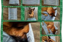 Dog's brain game
