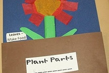 Classroom ideas / by Paige Herren