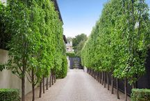 Driveways & Avenues / Love that 'all in a row' look .... here are some tree suggestions