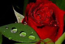 Hz. Muhammed (sav)'in örnek ahlakı tüm çağlara ışık tutuyor