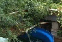 Garden: Ponds, Aquaponics, Fish Farming