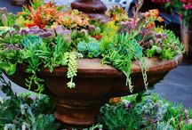 Succulents in water fountains awesome