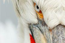 | BIRDS |