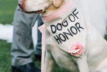 Tenue mariage chien