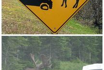 wild animals and humans