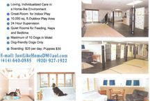 Local Grooming, Daycare, Boarding, and other dog service providers