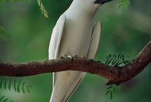 Birds / by Sheila Boulanger