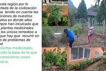 El Herbario Virtual Dircon 34774 / En mi región en toda casa o jardín existe sembrados de plantas medicinales; son utilizadas por su aroma en el aire,condimento para los platos,y remedios para nuestra salud