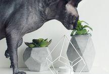 sphynx cats ✨