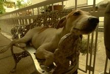 dogs i love / by Jennifer Cruz