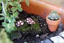 Fairy garden ideas / by Amber Dickson