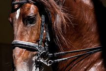 Equine / Power and beauty