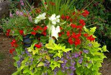 annual planters