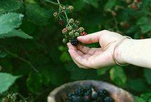 Brambleberry Shawl