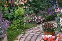 Hage / Min cottage garden drøm
