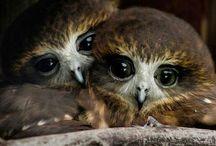 Owls / Great birds full of grace