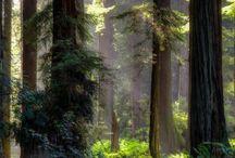 Real nature / Natur pur