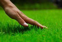 Lawn / Leuke, inspirerende gazons. Een gazon brengt samen met planten groen en sfeer in de tuin.