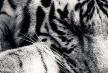 B & W { animals }