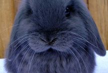 Sweet bunny....