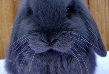 {Animals} Rabbits & wood
