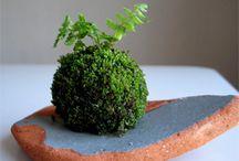 Kokedama ( plantas en bolas de musgo)