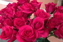 Roses / Roses we've gotten in the past... Or that can be special ordered for the future...