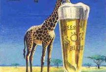 Giraffe / my favorite animal