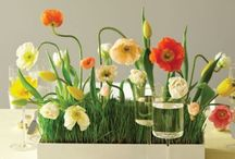 Entertaining~Centerpieces & Table Settings / by Roylene Turner